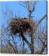 Nesting Bald Eagle Canvas Print