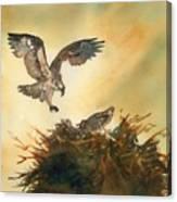 Nesting Ospray Canvas Print