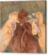 Nestlings.  Ducklings Huddled Together Canvas Print