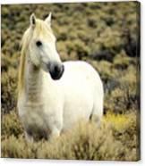 Nevada Wild Horses 3 Canvas Print