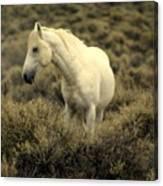 Nevada Wild Horses 4 Canvas Print