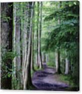Never Ending Trail Canvas Print