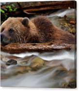 Never Give Up - Wilderness Art Canvas Print