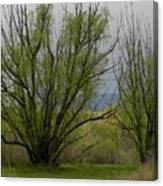 New and Green Canvas Print