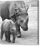 New Born Rhino And Mom Canvas Print