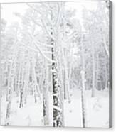 New England - Snow Covered Forest Canvas Print