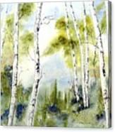 New England Birches Canvas Print