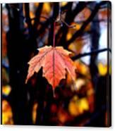 New England Fall - Lone Canvas Print