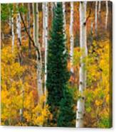 New Forests Canvas Print