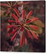 New Growth On A Shea Tree Canvas Print