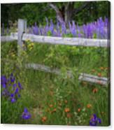 New Hampshire Wildflowers Canvas Print