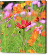 New Jersey Wildflowers Canvas Print