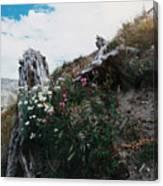 New Life Mt Saint Helens Wa Canvas Print