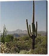 New Mexican Desert Canvas Print