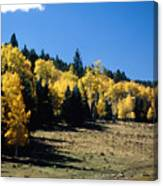 New Mexico Aspen Canvas Print