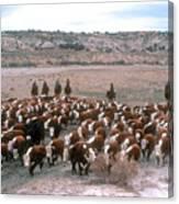 New Mexico Cattle Drive Canvas Print