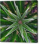 New Palm Leaves Canvas Print