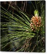 New Pine Cone Canvas Print