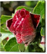 New Red Hibiscus Canvas Print