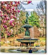 New York City Central Park Bethesda Fountain Blossoms Canvas Print