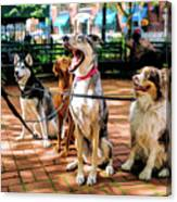 New York City Dog Walking Canvas Print