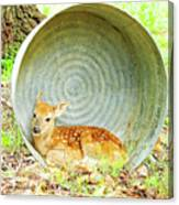 Newborn Fawn Finds Shelter In An Old Washtub Canvas Print