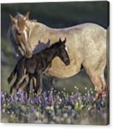 Newborn Filly At Dawn Canvas Print