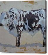Nguni Bull Canvas Print