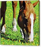 Nibbling On Flowers Canvas Print