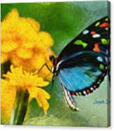 Nice Butterfly Canvas Print
