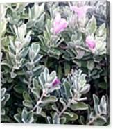 Nice Flowers  Canvas Print