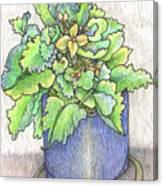 Nice Plant Canvas Print