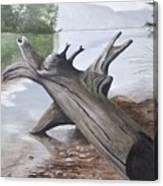 Nickajack Driftwood Canvas Print