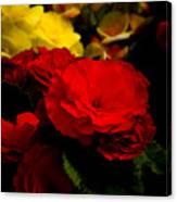 Night Begonias Five Canvas Print