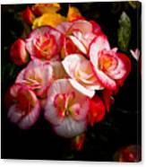 Night Begonias Three Canvas Print