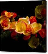 Night Begonias Two Canvas Print