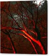 Night Blaze Canvas Print