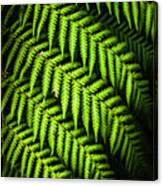 Night Forest Frond Canvas Print