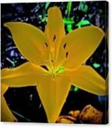 Night Glow Lily Canvas Print
