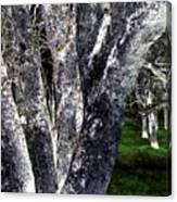 Night Grove Canvas Print