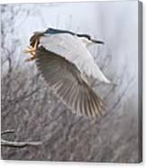 Night Heron In Flight Canvas Print