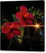 Night Hibiscus Canvas Print