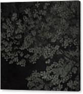 Night Leaves Canvas Print