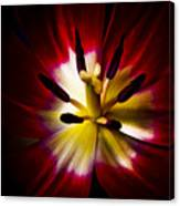 Night Lily Two Canvas Print