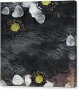 Night Lotus Canvas Print