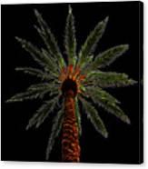 Night Palm Canvas Print