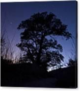night sky and trees in Molino Canyon Mount Lemmon AZ Canvas Print