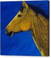 Night Wind Canvas Print