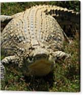 Nile Crocodile - Africa Canvas Print