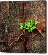 No Barriers To Growth Canvas Print